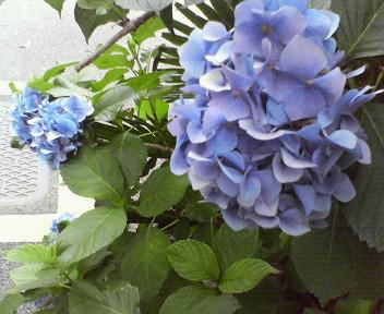 6月30日、曇りチョット雨。